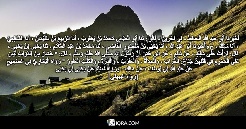 """أَخْبَرَنَا أَبُو عَبْدِ اللهِ الْحَافِظُ ، فِي آخَرِينَ ، قَالُوا: ثنا أَبُو الْعَبَّاسِ مُحَمَّدُ بْنُ يَعْقُوبَ ، أنا الرَّبِيعُ بْنُ سُلَيْمَانَ ، أنا الشَّافِعِيُّ ، أنا مَالِكٌ ، ح وَأَخْبَرَنَا أَبُو عَبْدِ اللهِ ، أنا يَحْيَى بْنُ مَنْصُورٍ الْقَاضِي ، ثنا مُحَمَّدُ بْنُ عَبْدِ السَّلَامِ ، ثنا يَحْيَى بْنُ يَحْيَى ، قَالَ: قَرَأْتُ عَلَى مَالِكٍ ، عَنْ نَافِعٍ ، عَنِ ابْنِ عُمَرَ أَنَّ رَسُولَ اللهِ صَلَّى اللهُ عَلَيْهِ وَسَلَّمَ ، قَالَ: """" خَمْسٌ مِنَ الدَّوَابِّ لَيْسَ عَلَى الْمُحْرِمِ فِي قَتْلِهِنَّ جُنَاحٌ: الْغُرَابُ ، وَالْحِدَأَةُ ، وَالْعَقْرَبُ ، وَالْفَأْرَةُ ، وَالْكَلْبُ الْعَقُورُ """" رَوَاهُ الْبُخَارِيُّ فِي الصَّحِيحِ عَنْ عَبْدِ اللهِ بْنِ يُوسُفَ ، عَنْ مَالِكٍ ، وَرَوَاهُ مُسْلِمٌ عَنْ يَحْيَى بْنِ يَحْيَى <br> [رواه البيهقي]"""